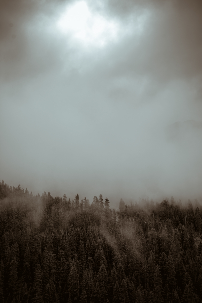 The mood of trees on Loveland Pass