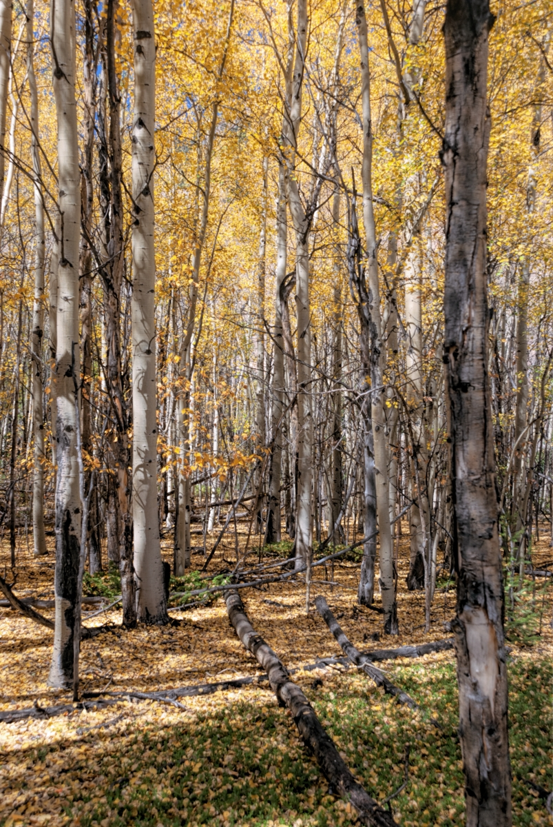 forrest, colorado, georgetown, color, fall, autumn, photo